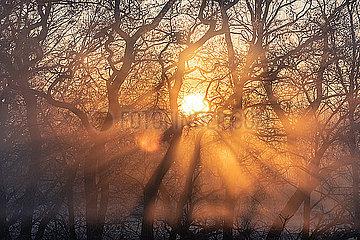 Sonnenaufgang im Fruehnebel p739m2071156