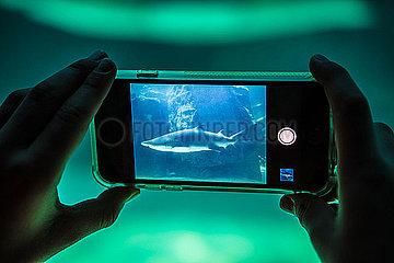 Haifisch auf dem Smartphone p1082m2071324