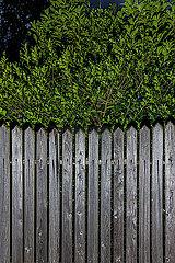 Dunkler Zaun im Spessart p248m2076890