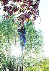 Baeume im Fruehling