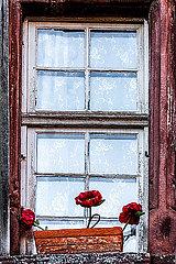 Kunstblumen am Fenster