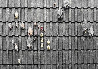 Dachziegel mit Plastikenten