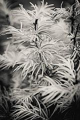 Filigrane Blumen
