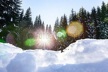 Sonnenlicht im Winterwald