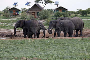Elefanten in Botswana 360-berlin