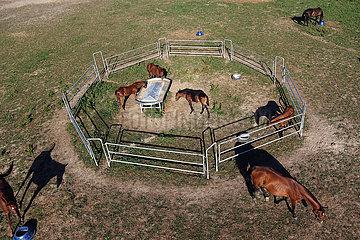 Gestuet Goerlsdorf  Fohlen fressen auf der Weide in einem separaten Gatter mit Fohlenschlupf