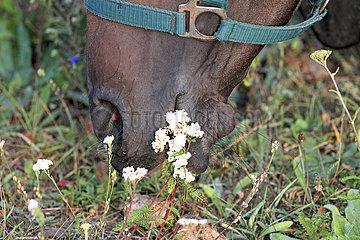 Neuenhagen  Detailaufnahme  Pferd beim Grasen