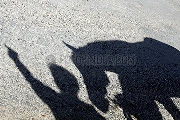 Gestuet Goerlsdorf  Schatten von Mensch und Pferd am Boden