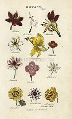 Types of flowers: Triandria  Diandria  Hexandria  Pendandria  Tetrandria  etc.