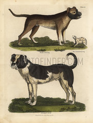 Breeds of dogs  Canis lupus familiaris.