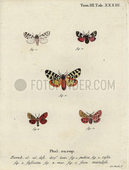 Discrete chaperon and tiger moths.