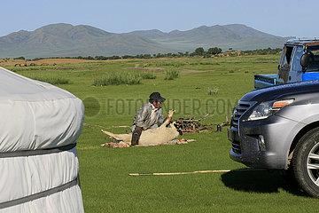 ein Schaf wird geschlachtet Kamel in der Nationalpark Altai Tawan Bogd in der Mongolei