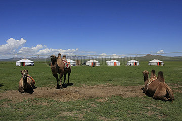Kamele ausruhen in der Mongolei Kamel in der Nationalpark Altai Tawan Bogd in der Mongolei