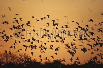 Birds Pantanal Brazil