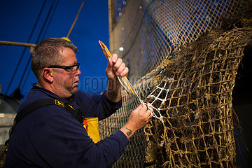 Puls trawling in the North sea