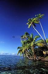 VAHINE ISLAND VAHINE ISLAND