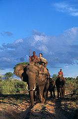 BOTSWANA - Okavango (ABU CAMP)