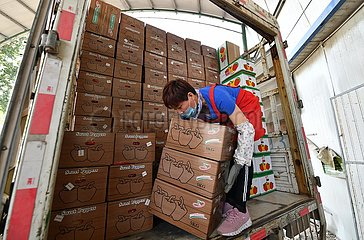 CHINA-SHANDONG-SHOUGUANG-VEGETABLE EXPORT (CN)