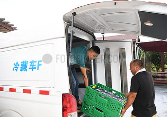 CHINA-CHONGQING-BLUEBERRY INDUSTRY-RURAL DEVELOPMENT (CN)