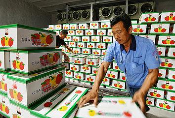 CHINA-SHANDONG-SHOUGUANG-VEGETABLE EXPORT (CN)