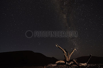 NAMIBIA  NAMIB DESERT  SOSSUSVLEI DUNES  DEAD TREE AT NIGHT