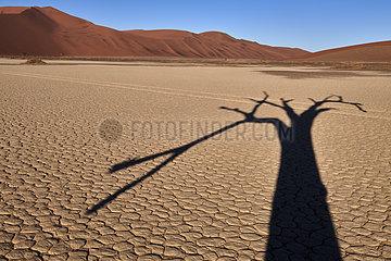 NAMIBIA  NAMIB DESERT  SOSSUSVLEI DUNES  DEATH VLEI