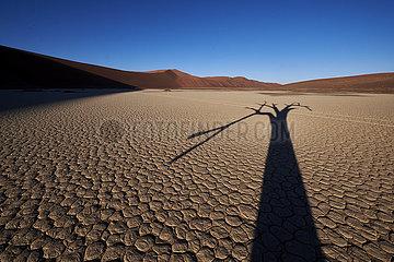 NAMIBIA  NAMIB DESERT  SOSSUSVLEI DUNES  DEATH VLEI  DEAD TREE  SHADE