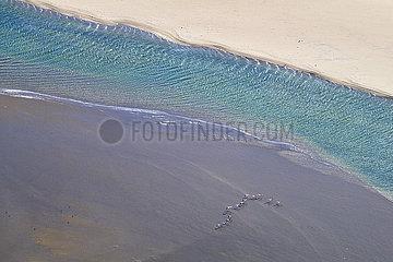 NAMIBIA  NAMIB DESERT  WALVIS BAY  GREATER FLAMINGOS
