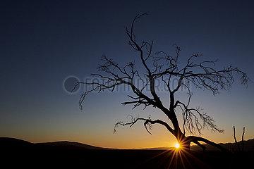 NAMIBIA  NAMIB DESERT  SOSSUSVLEI DUNES  DEAD TREE