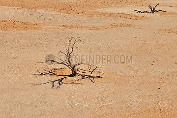 NAMIBIA  NAMIB DESERT  SOSSUSVLEI DUNES  DEATH VLEI  DEAD TREE