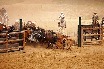 Kampfstierzucht in Spanien