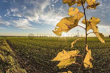 Windrad an einem sonnigen Herbstabend auf der Schwäbischen Alb.