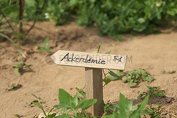 Nutzgärten auf dem 'Gartenglück-Acker' bei Troisdorf