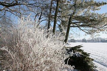 Winter im Woerlitzer Park
