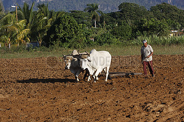 Tal von Vinales in Kuba