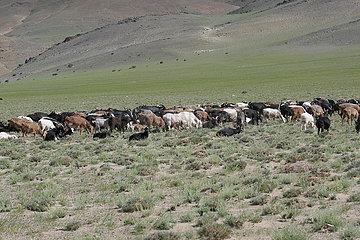 Grassteppe in der Westliche Mongolei.