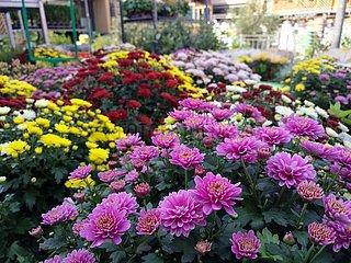 Blumen im Gartenfachgeschaeft