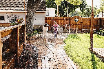 Girl rides bike through sprinkler in backyard with big dog watching
