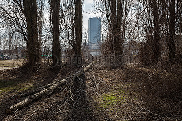 Umgekippter Baum und Allianz-Tower in der Glasblaeserallee in Berlin-Friedrichshain