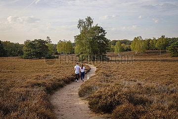 Westruper Heide  Muensterland  Nordrhein-Westfahlen  Deutschland