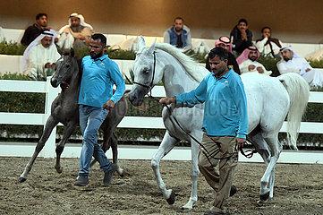 KUWAIT-MUBARAK AL-Kabeer GOVERNORATE-arabische Pferde-Auktion