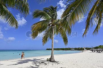 Kuba  Guardalavaca- Karibische Kuestenlandschaft