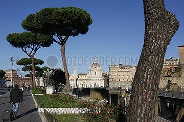 Pinienbaeume in Rom