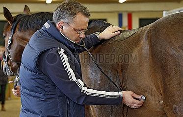 Wardow  Tierarzt horcht nach den Darmgeraeuschen eines Pferdes