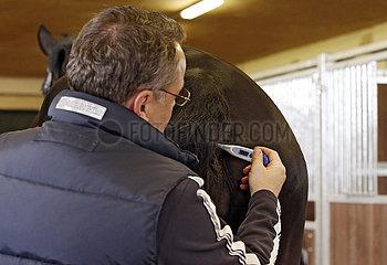 Wardow  Fiebermessen bei einem Pferd