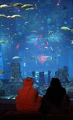 Dubai  Vereinigte Arabische Emirate  Menschen im Dubai Aquarium der Mall of Dubai