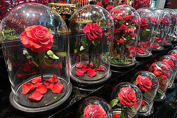 Dubai  Vereinigte Arabische Emirate  konservierte Rosen unter Glas