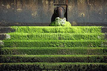 Totland  Grossbritannien  Treppe ist mit gruenen Algen ueberzogen