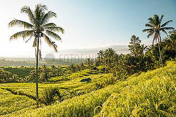 Jatiluwih Rice Terraces  Tabanan  Bali  Indonesia