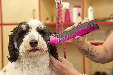 Hundesalon   Pet Grooming